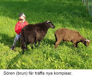 selevitan till får